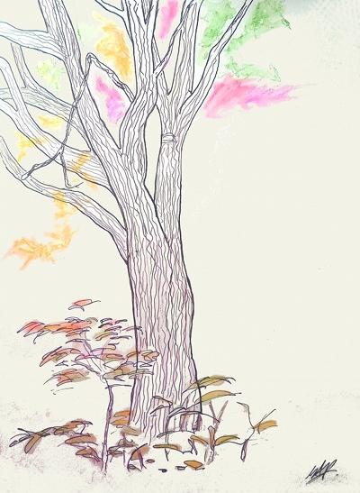 tree - web